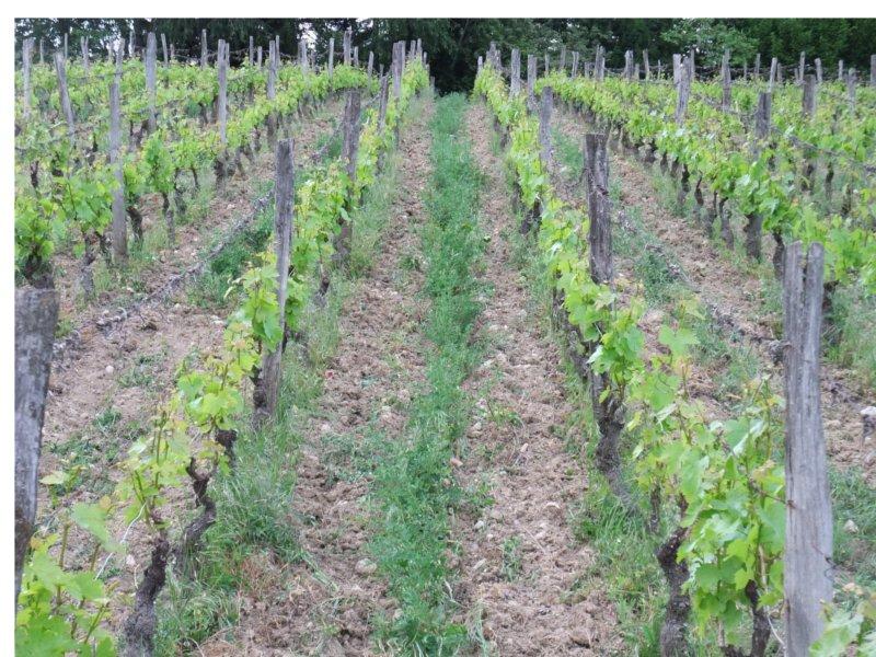travaille du sol vigne